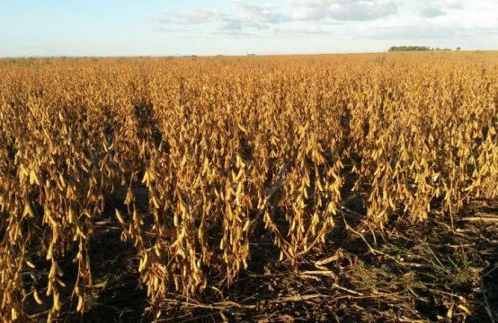 Fracción de campo – 67 hectáreas – Leubucó