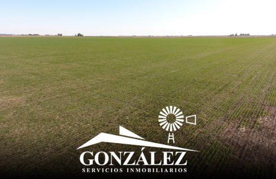 200 has agrícolas en Juan José Paso