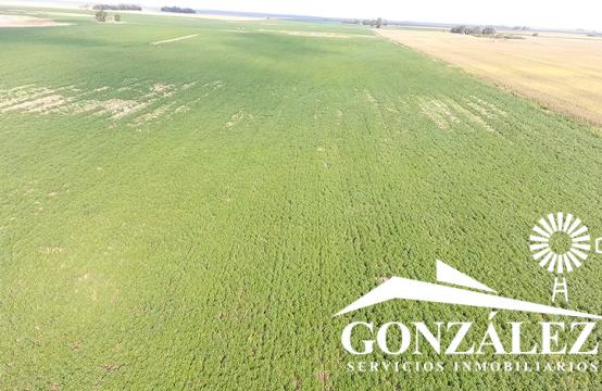92 hectáreas agrícolas