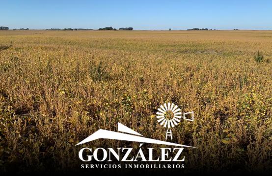 128 hectáreas agrícolas