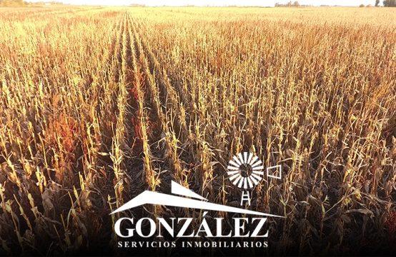 30 hectáreas agrícolas