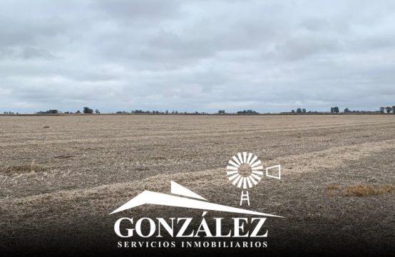 250 hectáreas en De Bary