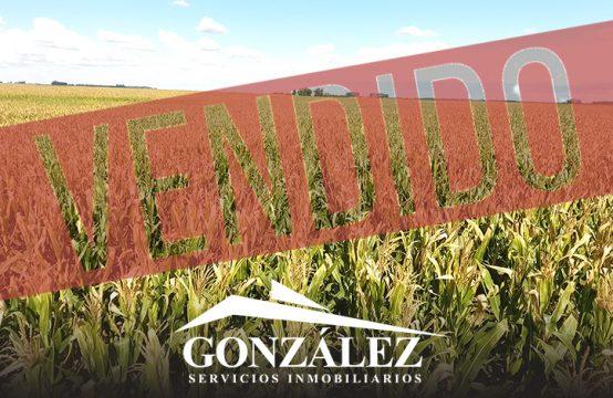 118 hectáreas agrícolas