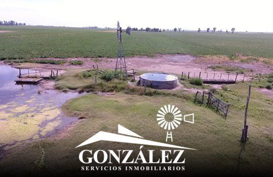 160 hectáreas en Tres Lomas